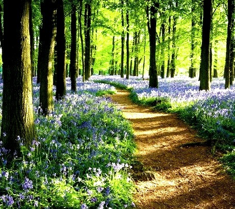 Bluebelle Path, Ashley Woods, Great Britain