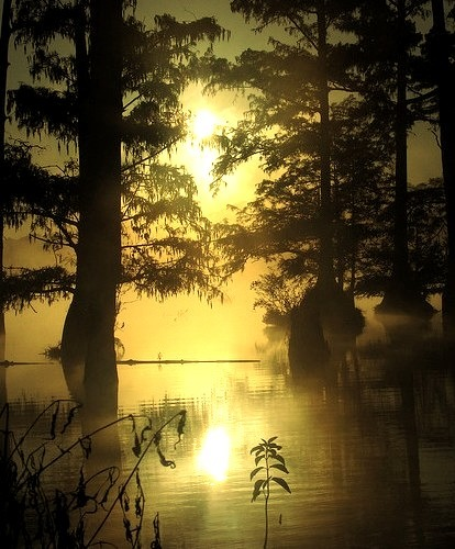 Morning at Bluff Lake, Noxubee National Wildlife Refuge, Mississippi, USA