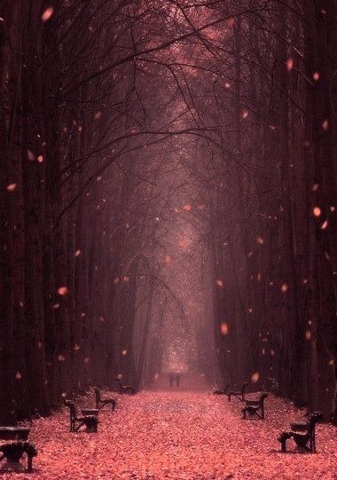 Falling Leaves, Minsk Botanical Garden, Belarus