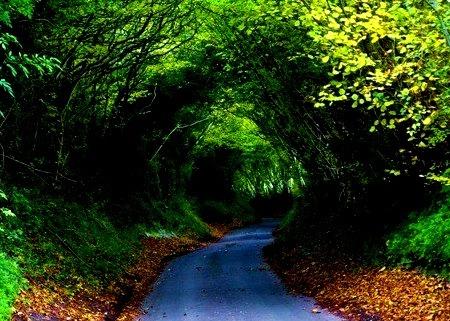 Hobbit Tree Tunnel, Dancersend, England