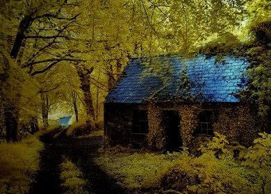 Ancient Forest Cottage, Stradbally, Ireland