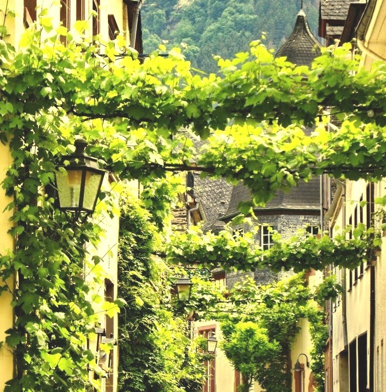 Vines covering streets, Traben-Trarbach / Germany